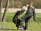 Galerie 030 Mio Schutz (www.dog-pics.at).jpg anzeigen.