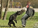 Galerie 031 Mio Schutz (www.dog-pics.at).jpg anzeigen.