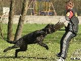 Galerie 032 Mio Schutz (www.dog-pics.at).jpg anzeigen.