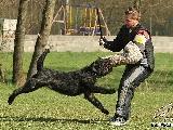 Galerie 033 Mio Schutz (www.dog-pics.at).jpg anzeigen.