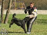 Galerie 034 Mio Schutz (www.dog-pics.at).jpg anzeigen.
