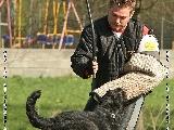 Galerie 035 Mio Schutz (www.dog-pics.at).jpg anzeigen.