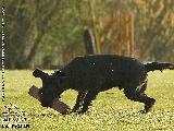 Galerie 045 Forte Unterordnung (www.dog-pics.at).jpg anzeigen.