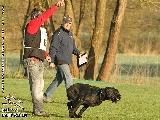 Galerie 052 Forte Unterordnung (www.dog-pics.at).jpg anzeigen.