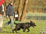 Galerie 053 Forte Unterordnung (www.dog-pics.at).jpg anzeigen.