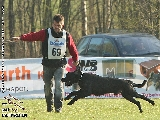 Galerie 057 Forte Schutz (www.dog-pics.at).jpg anzeigen.