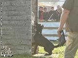 Galerie 060 Forte Schutz (www.dog-pics.at).jpg anzeigen.