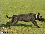 Galerie 061 Forte Schutz (www.dog-pics.at).jpg anzeigen.