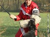 Galerie 069 Forte Schutz (www.dog-pics.at).jpg anzeigen.