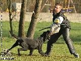 Galerie 075 Forte Schutz (www.dog-pics.at).jpg anzeigen.