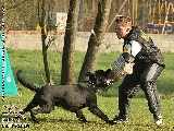 Galerie 076 Forte Schutz (www.dog-pics.at).jpg anzeigen.