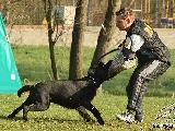 Galerie 077 Forte Schutz (www.dog-pics.at).jpg anzeigen.