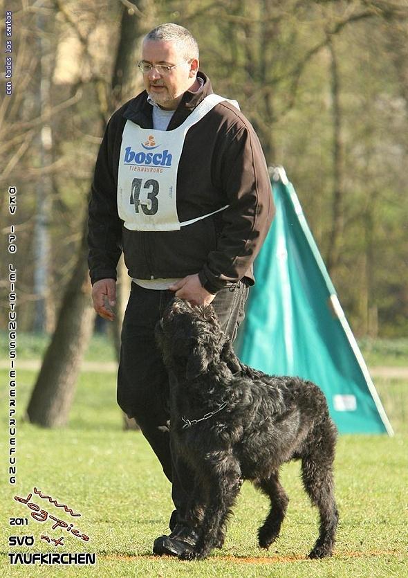 http://www.riesenschnauzer.or.at/fotos/cache/vs_OEKV%20Sieger%202011_001%20Mio%20Unterordnung%20(www.dog-pics).jpg