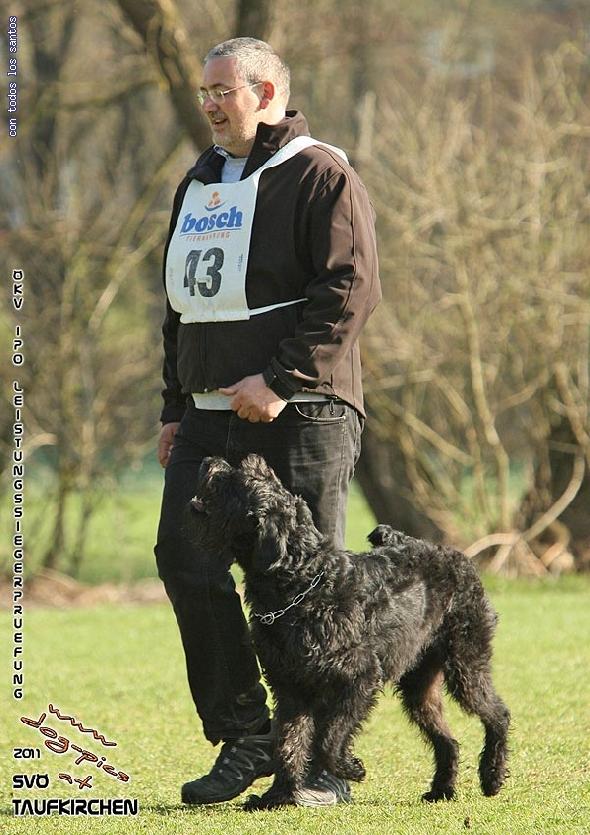 http://www.riesenschnauzer.or.at/fotos/cache/vs_OEKV%20Sieger%202011_002%20Mio%20Unterordnung%20(www.dog-pics.at).jpg