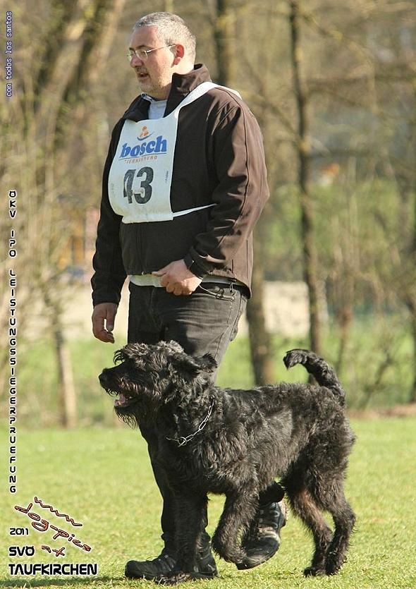 http://www.riesenschnauzer.or.at/fotos/cache/vs_OEKV%20Sieger%202011_003%20Mio%20Unterordnung%20(www.dog-pics.at).jpg