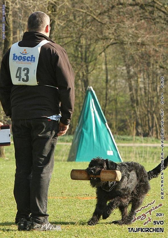 http://riesenschnauzer.or.at/fotos/cache/vs_OEKV%20Sieger%202011_007%20Mio%20Unterordnung%20(www.dog-pics.at).jpg