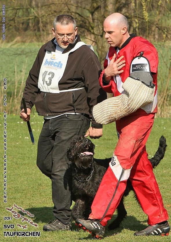 http://riesenschnauzer.or.at/fotos/cache/vs_OEKV%20Sieger%202011_029%20Mio%20Schutz%20(www.dog-pics.at).jpg